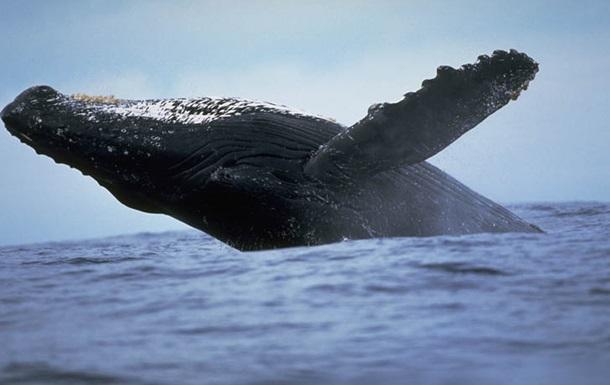 Австралієць показав рідкісні знімки 20-тонного кита