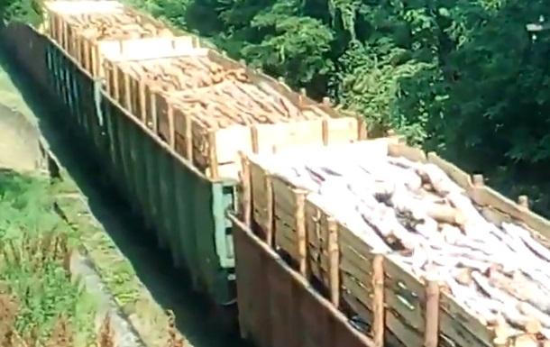 У Мережі обговорюють вивезення карпатського лісу з України