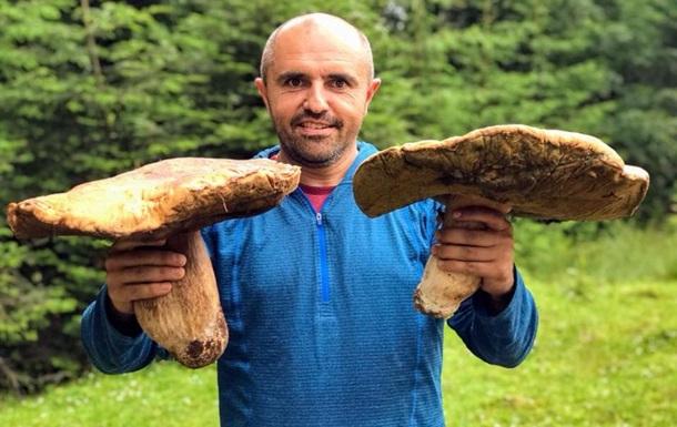 У Карпатах збирають величезні гриби