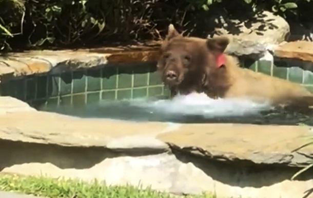 Ведмідь вирішив насолодитися джакузі: хіт Мережі