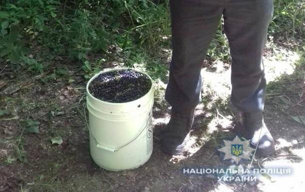 В зоне ЧАЭС задержан мужчина с 12 кг черники
