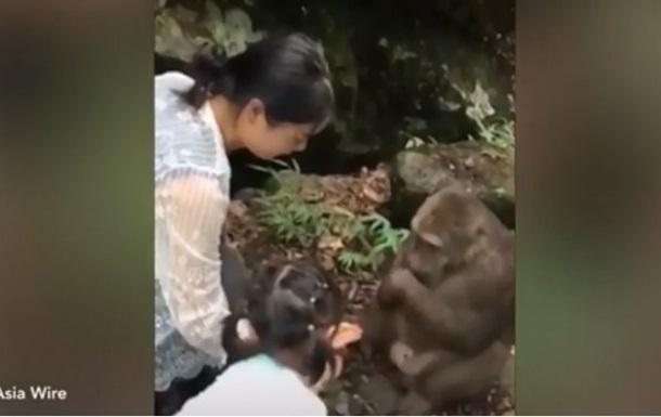 Мавпа вдарила в обличчя дівчинку, яка годувала її