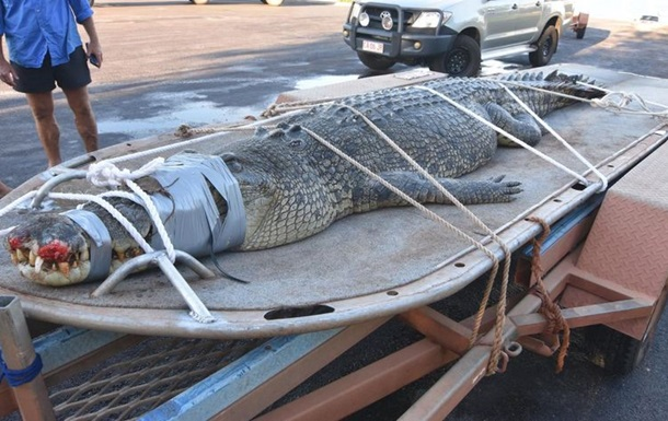 Крокодила-гіганта впіймали через 8 років полювання