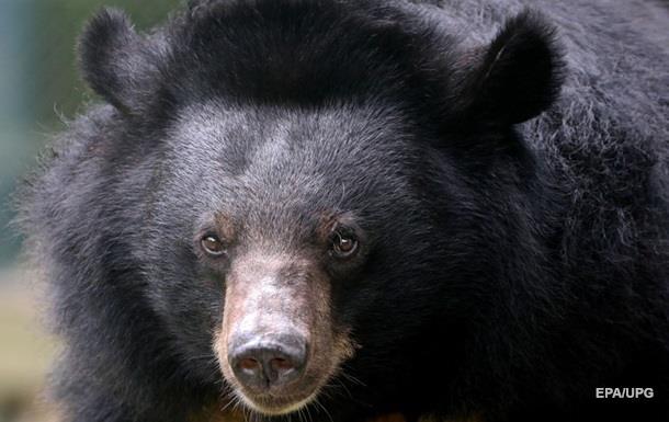 Під Житомиром врятували трьох ведмедів