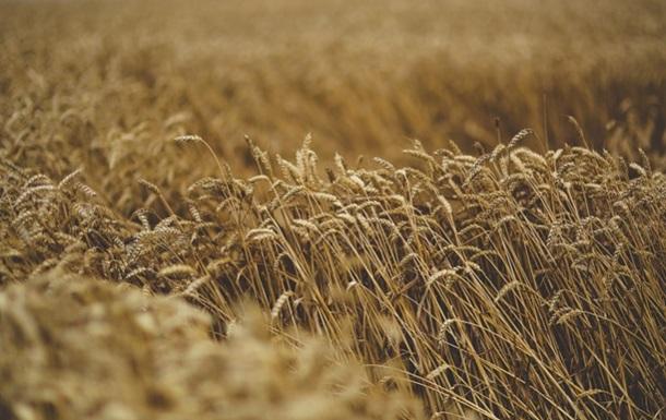 В Минагрополитики назвали самые прибыльные зерновые