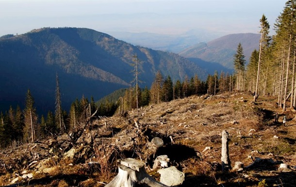Специалисты: Украина занимает первое место по преступным поставкам леса встраныЕС