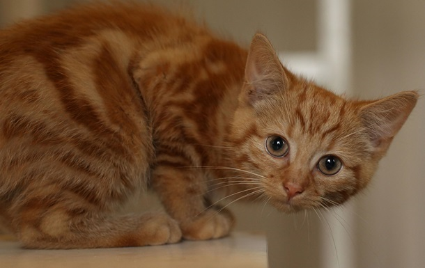 В Харькове напали на приют для котов и убили всех животных
