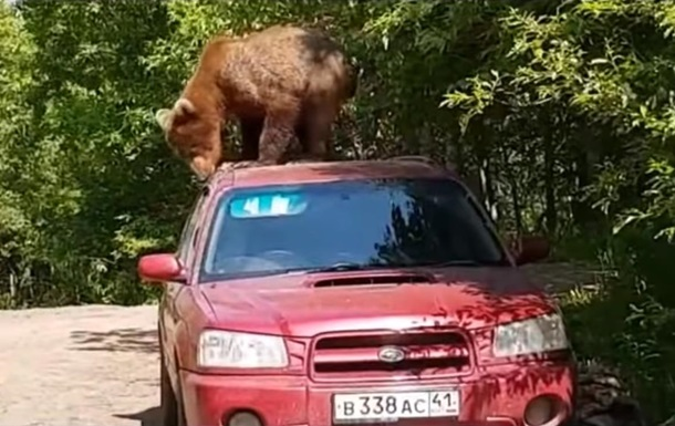 У Росії ведмідь намагався проникнути в салон машини