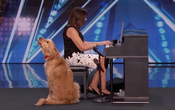У США на шоу талантів у наступне коло вийшов пес