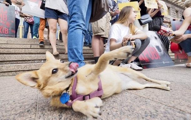 В Киеве на акции призвали наказывать живодеров