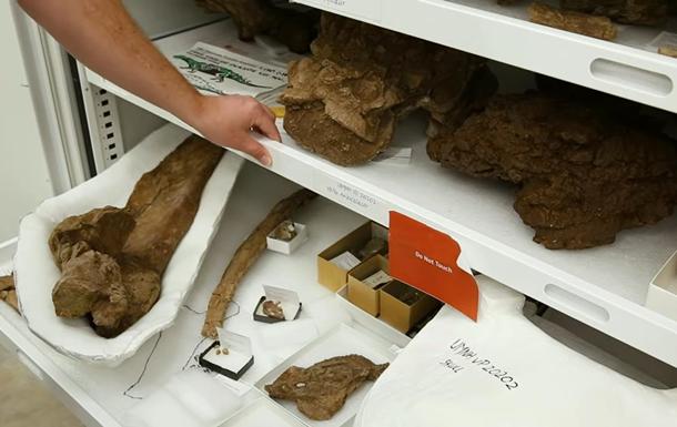 У США виявили новий вид динозавра
