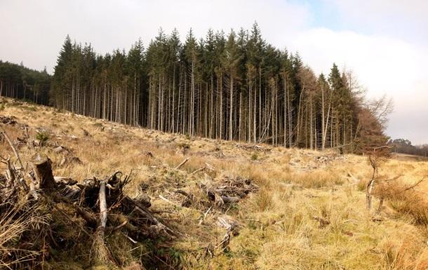Порошенко ветував закон проти вирубки лісів