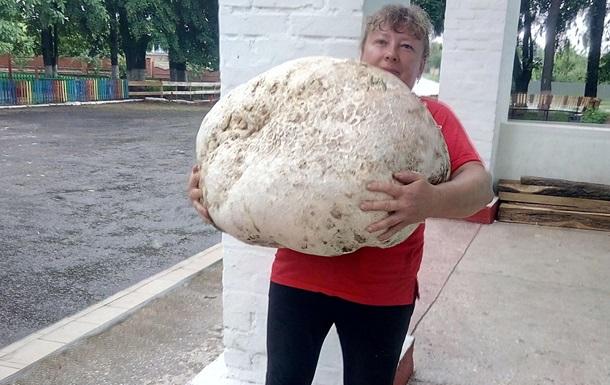 У Київській області знайшли гриб вагою близько 18 кг