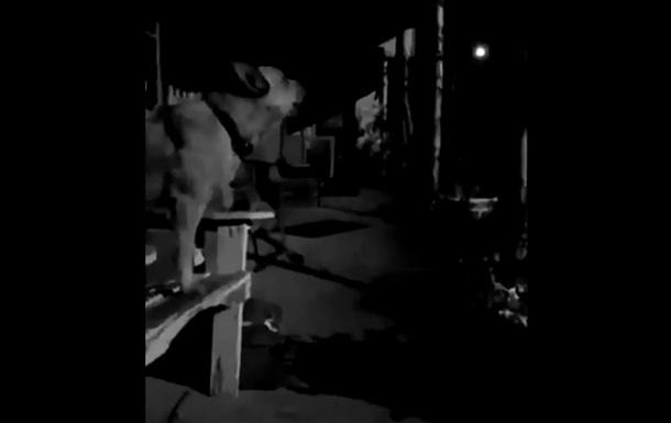 Собака випадково  заспівав  хіт Брітні Спірс