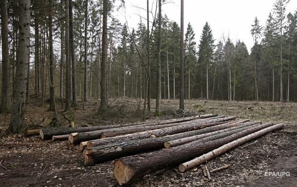 За рік з України вивезли понад мільйон тонн лісу