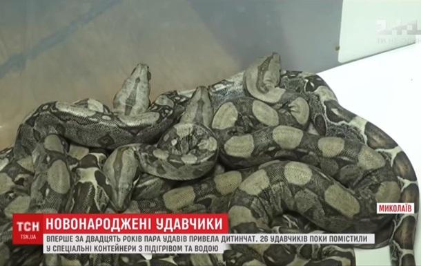 У зоопарку Миколаєва народилися 26 удавів