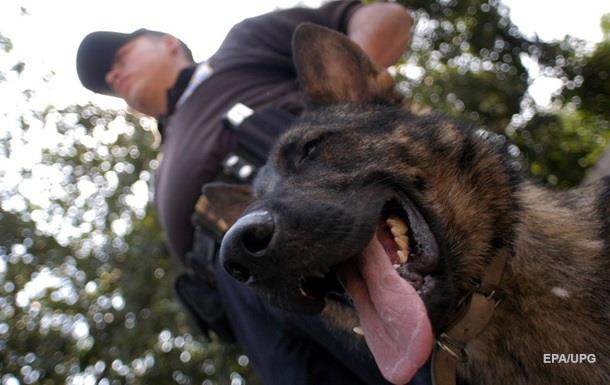 В Колумбии мафия объявила награду за убийство пса