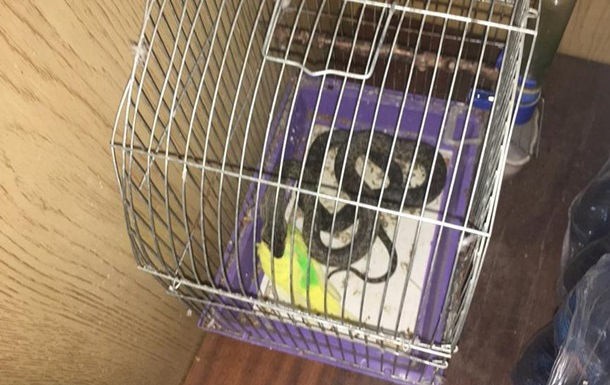 Мешканка Миколаєва виявила на балконі змію в клітці з папугою
