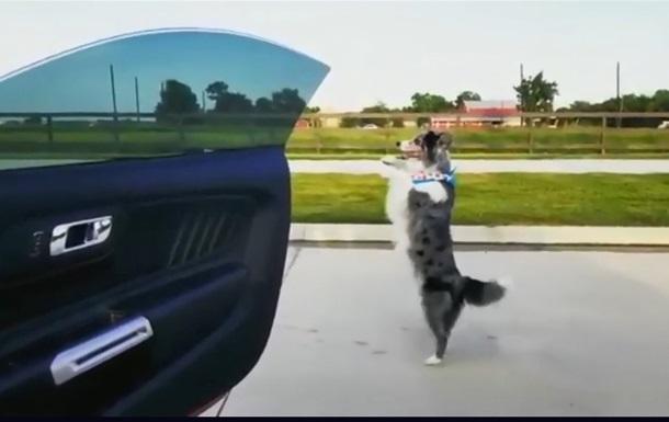 Собака курьезно станцевала под песню рэпера Дрейка