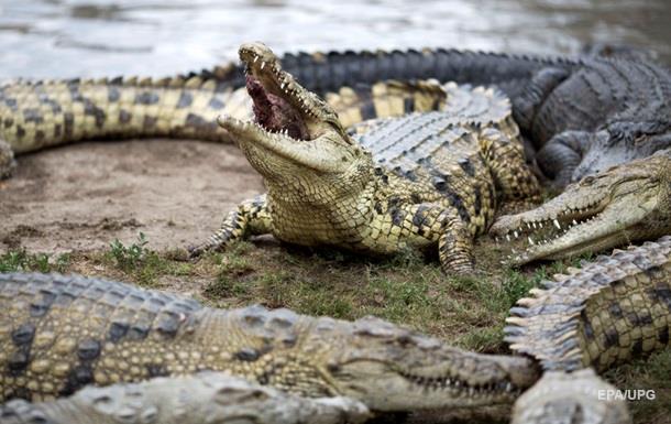 Биолог рассказала, как спаслась из пасти крокодила
