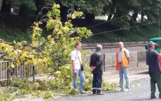 У центрі Львова зламана гілка обірвала трамвайні дроти