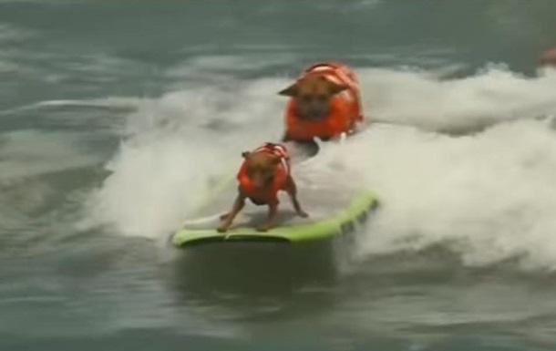 У США пройшли змагання із серфінгу серед собак