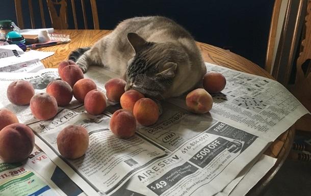 Дивне захоплення кота здивувало завсідників мережі