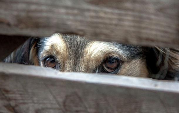 В Україні вперше заарештували чоловіка за жорстоке поводження з тваринами