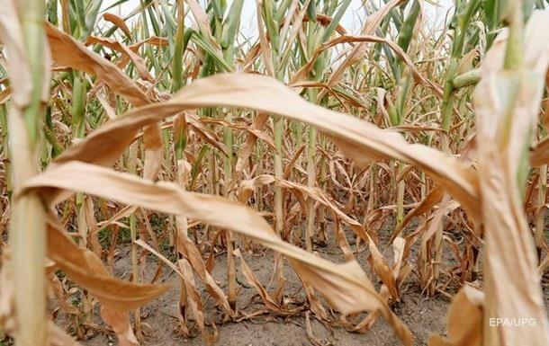 Германские  фермеры недосчитались 1млрдевро из-за засухи