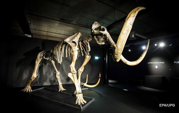 Вчені знайшли скелет мамонта з м якими тканинами і шерстю