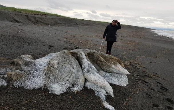 Волосатый монстр  испугал жителей Камчатки