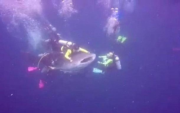 Дайвер  оседлал  акулу и попал за решетку