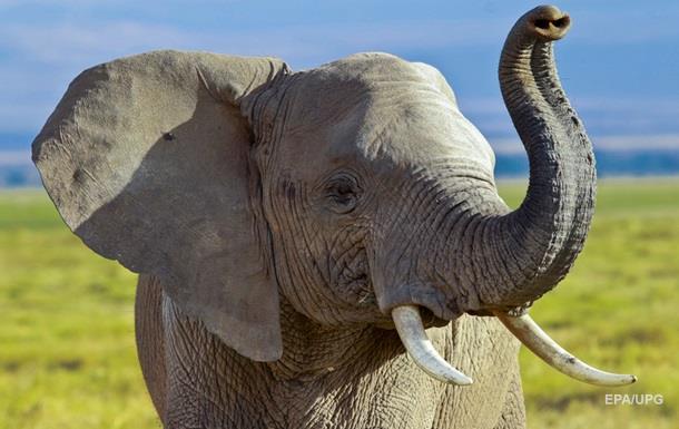 На Шри-Ланке слон напал на автомобиль с туристами