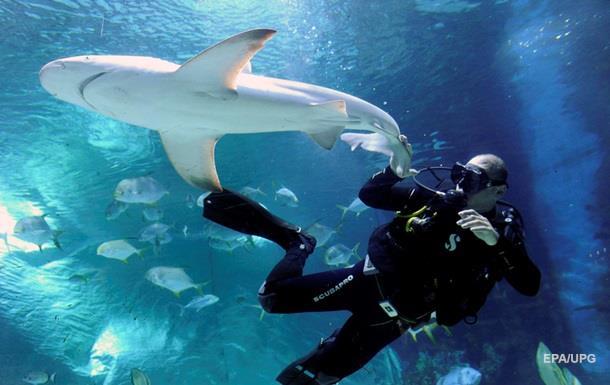 Дайвер заліз у пащу до акули і врятував їй життя