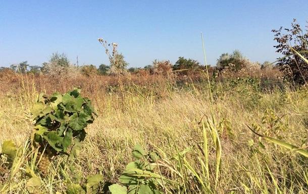 В Одеській області спалили виноградники бізнесмена із Франції