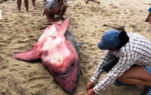 На берег в США вынесло красную акулу