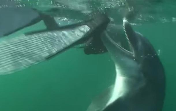 Французы закрыли пляж из-за возбужденного дельфина