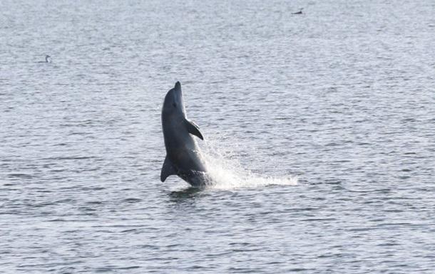 Вчені зафіксували випадок, коли дельфін навчив трюку родичів