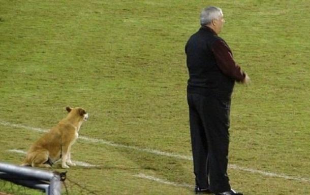 В Парагвае пес тренирует футбольную команду