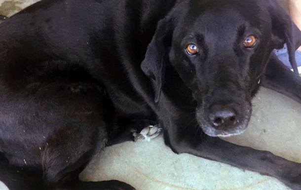 Пес спас американца от 50 лет в тюрьме