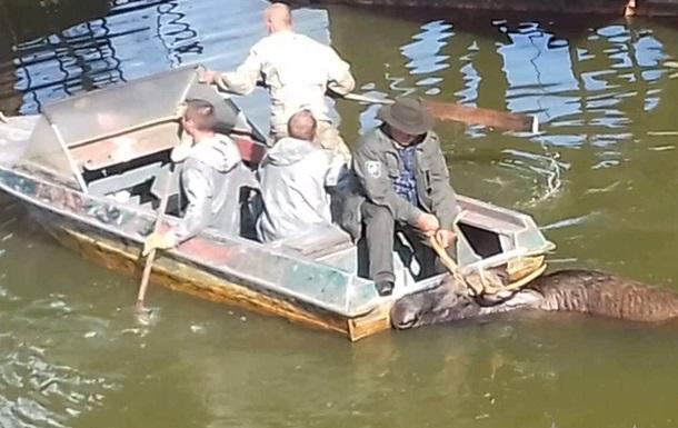 У Чорнобильській зоні лося врятували з водного полону