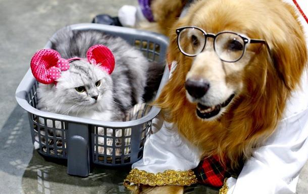 У США підтримали заборону на споживання м яса кішок і собак