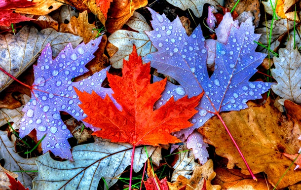 Золотая осень, голубой сентябрь