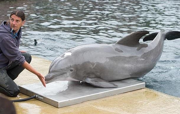 Умер самый старый дельфин, живший в неволе