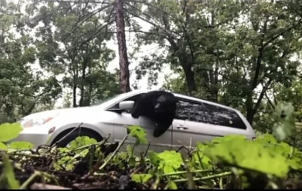 Запертый в автомобиле медведь попал на видео