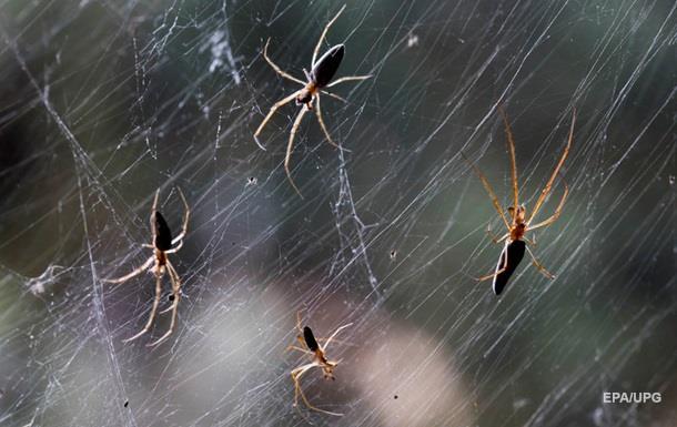 Павуки рік лякали жінку моторошною пісенькою з хоррорів