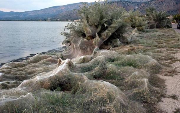 Гигантская паутина окутала побережье греческого острова