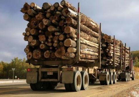 Власть начинает борьбу с лесхозами и проигрывает.
