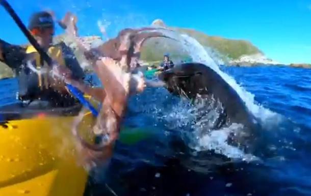 Тюлень врізав чоловікові восьминогом по обличчю