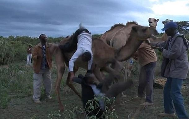 Оскаженілий верблюд ледь не затоптав журналістів